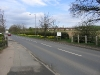 daffodils-on-stapleford-road-planted-by-the-trowell-parish-councillors