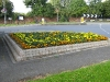flower-beds